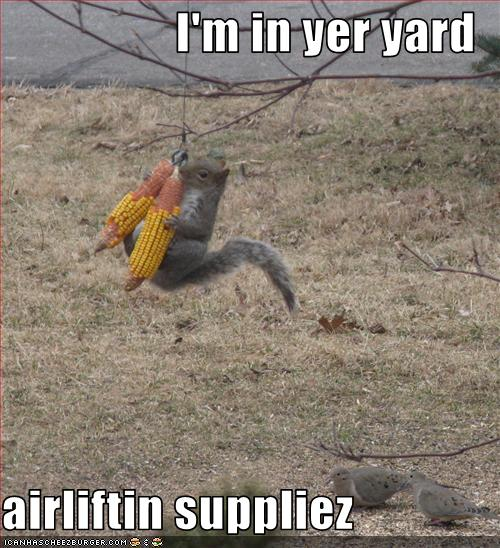 funny pictures squirrel airlifts supplies In the spirit of Jedi Squirrels, Army Squirrel, and Sith Squirrel, ...